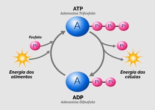 atp_ciclo